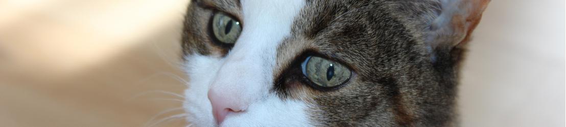 Homepage kat Animalwebshops