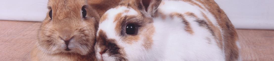 Homepage konijnen Animalwebshops