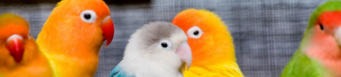 Homepage vogels Animalwebshops