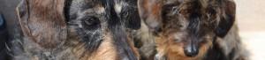 Homepage hondenpenning hondenpenningen honden Animalwebshops