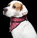 Aquacoolkeeper koelsjaaltje cool bandana bij AnimalWebshop.com