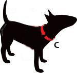 Halsbanden AnimalWebshop.com bepaald de halsbandmaat van uw hond