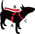Halsbanden AnimalWebshop.com bepaald de tuigmaat van uw hond