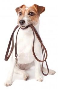 halsbanden site halsband halsbandensite hond hondenlijn hondenriem tuig hondentuig AnimalWebshop
