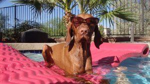 Hond op vakantie
