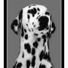 Gedenksteen rechthoek Dierenafscheid Hondenpenning.net AnimalWebshop.com HETDIER.nl